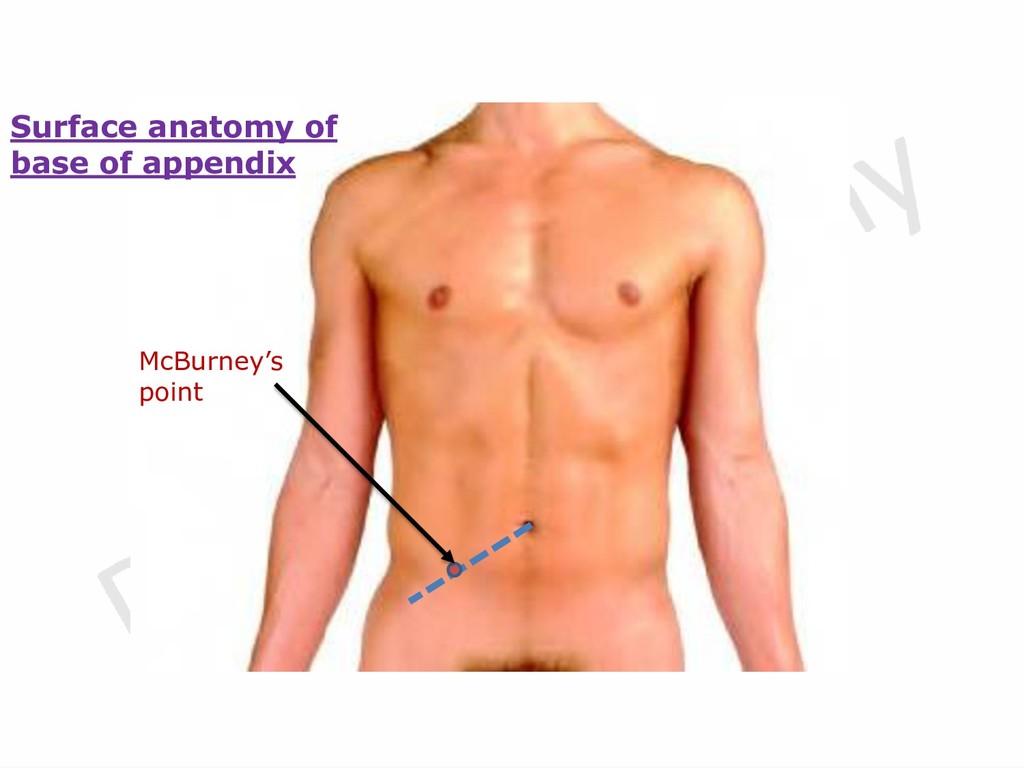 McBurney's point Surface anatomy of base of app...