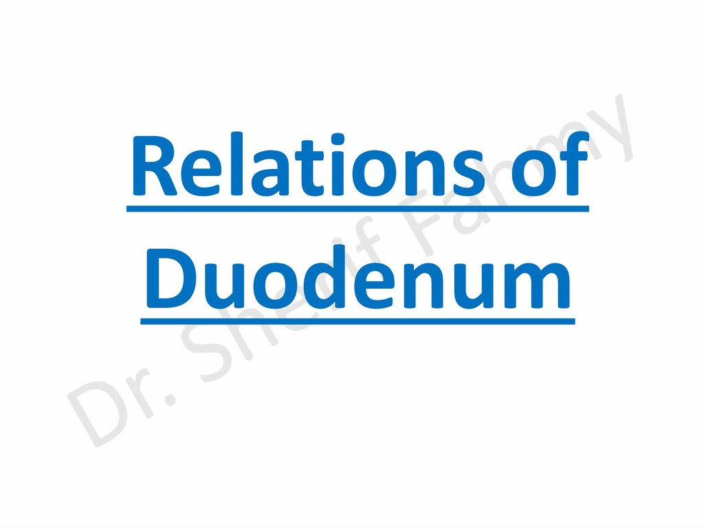 Relations of Duodenum