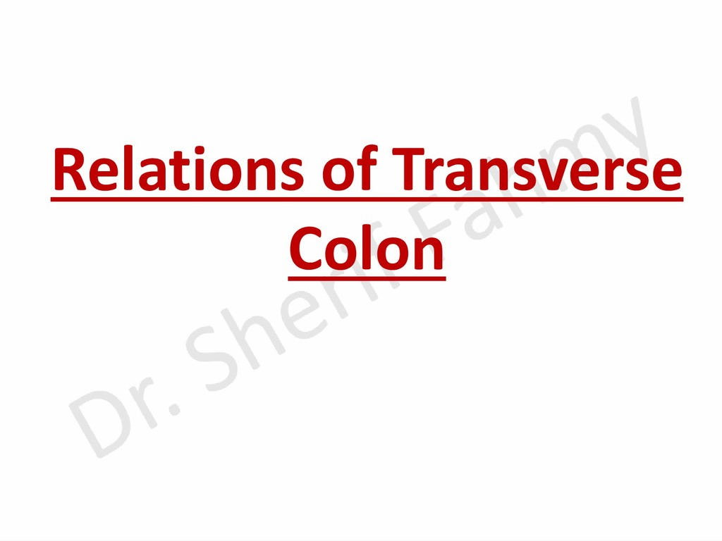 Relations of Transverse Colon