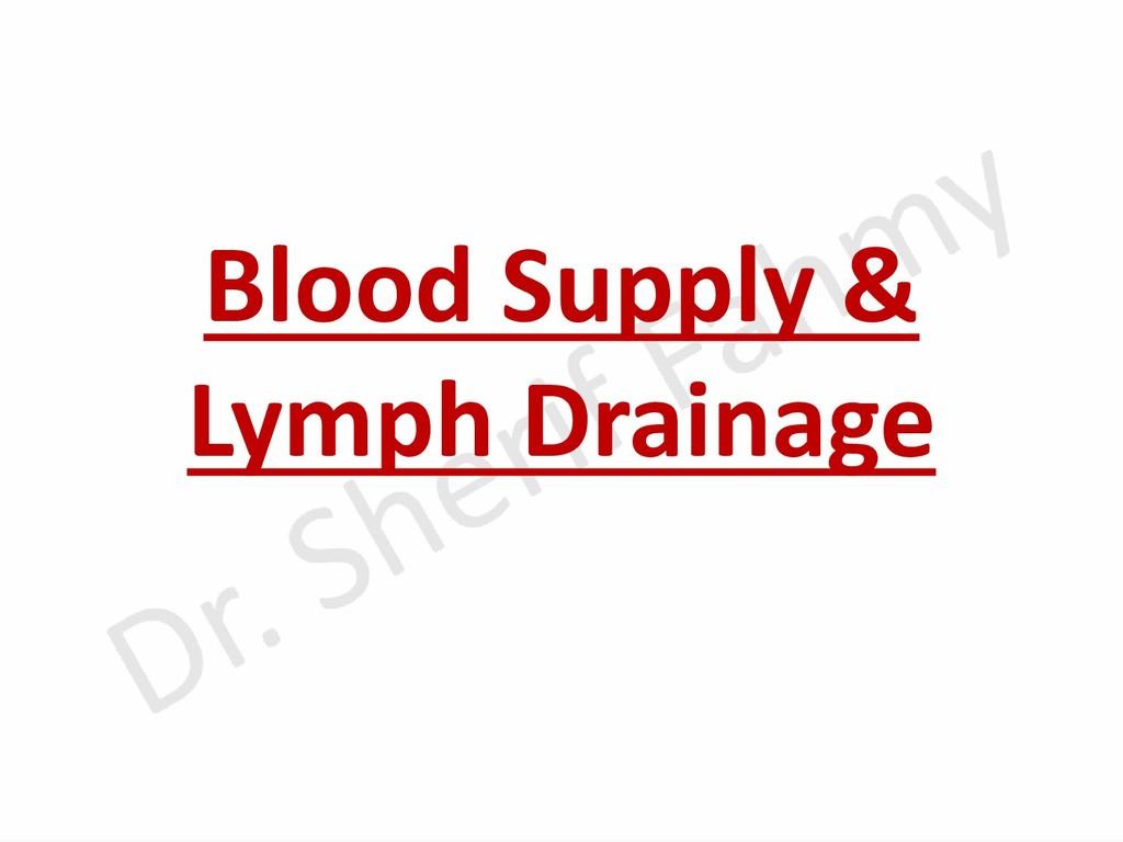 Blood Supply & Lymph Drainage