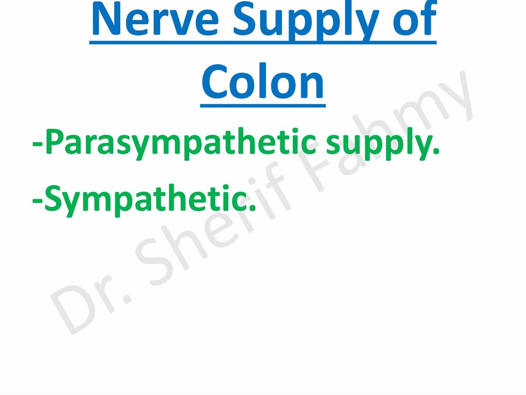 Nerve Supply of Colon -Parasympathetic supply. ...