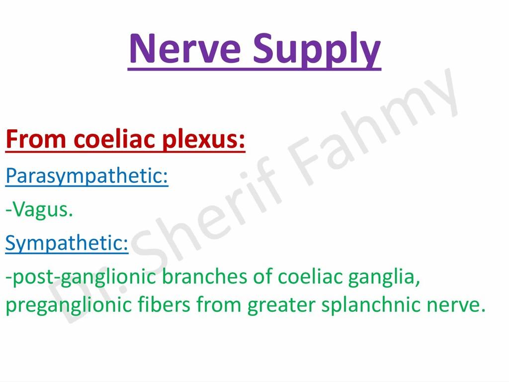 Nerve Supply From coeliac plexus: Parasympathet...