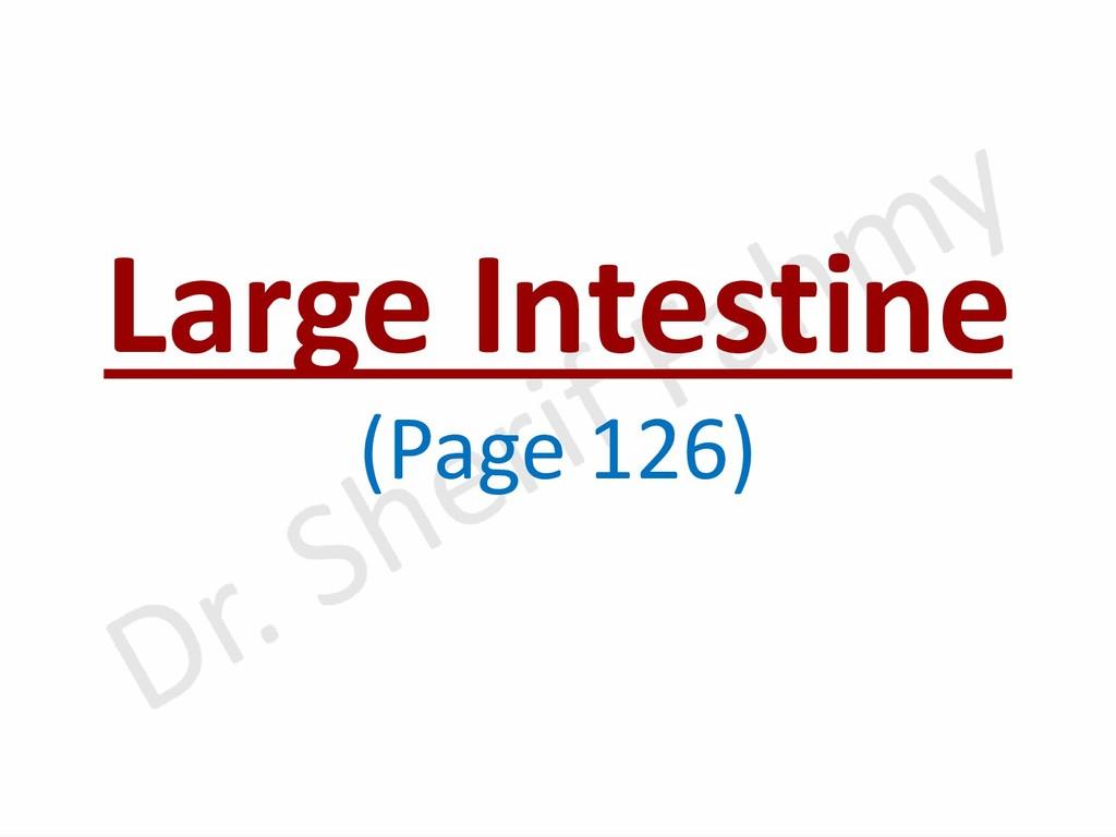 Large Intestine (Page 126)
