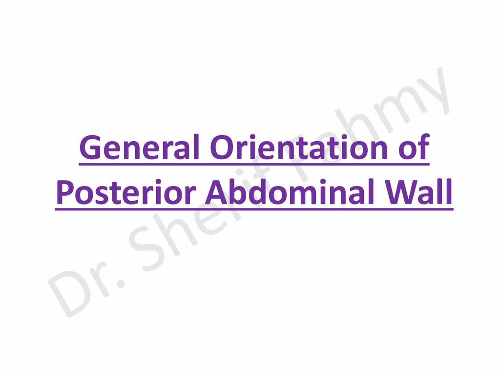 General Orientation of Posterior Abdominal Wall
