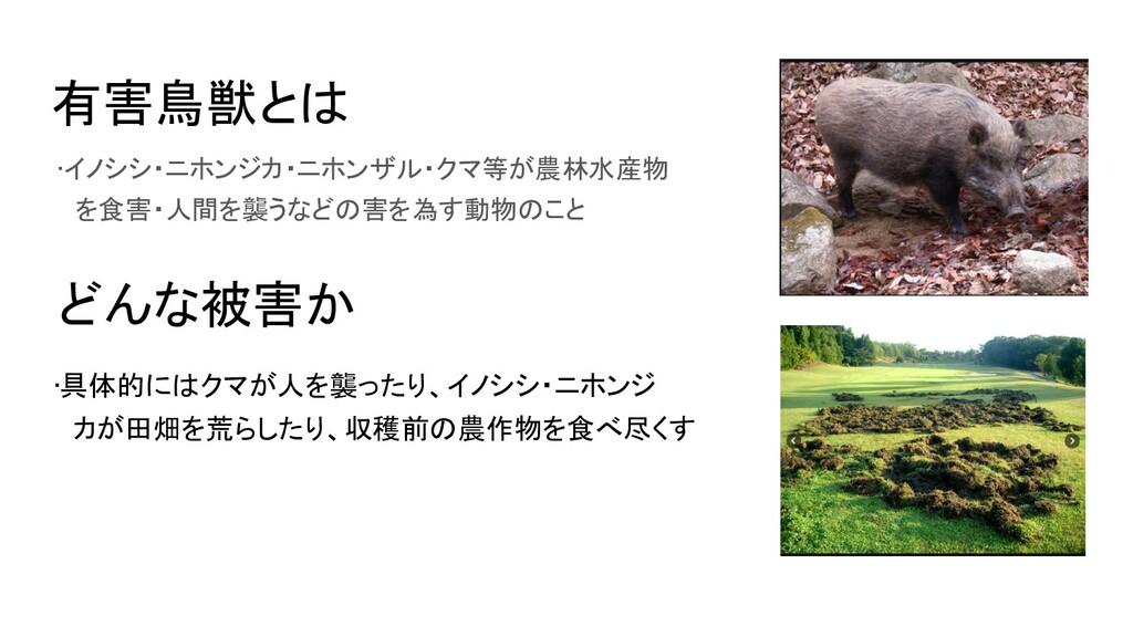 有害鳥獣とは •イノシシ・ニホンジカ・ニホンザル・クマ等が農林水産物  を食害・人間を襲う...