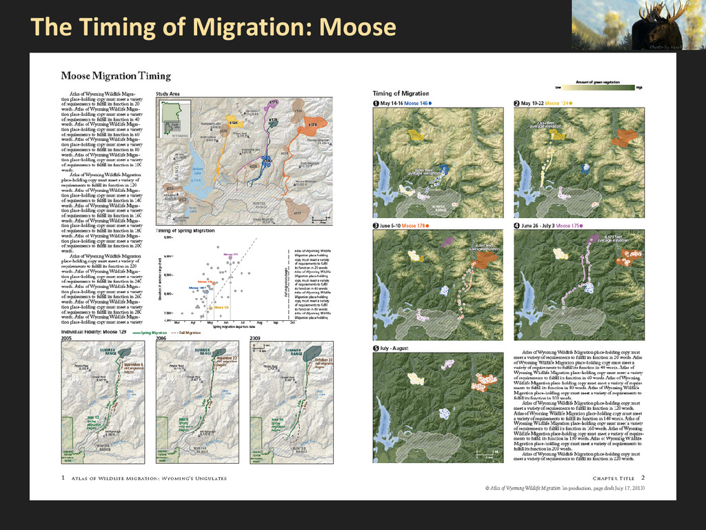 The Timing of Migration: Moose