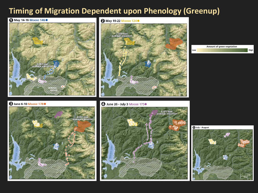 Timing of Migration Dependent upon Phenology (G...