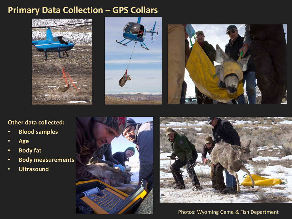 Primary Data Collection – GPS Collars Photos: W...
