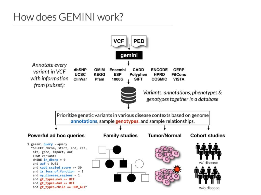 How does GEMINI work?