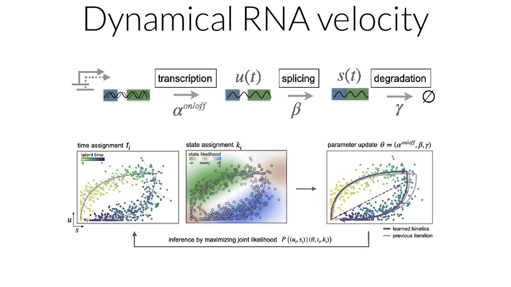 Dynamical RNA velocity
