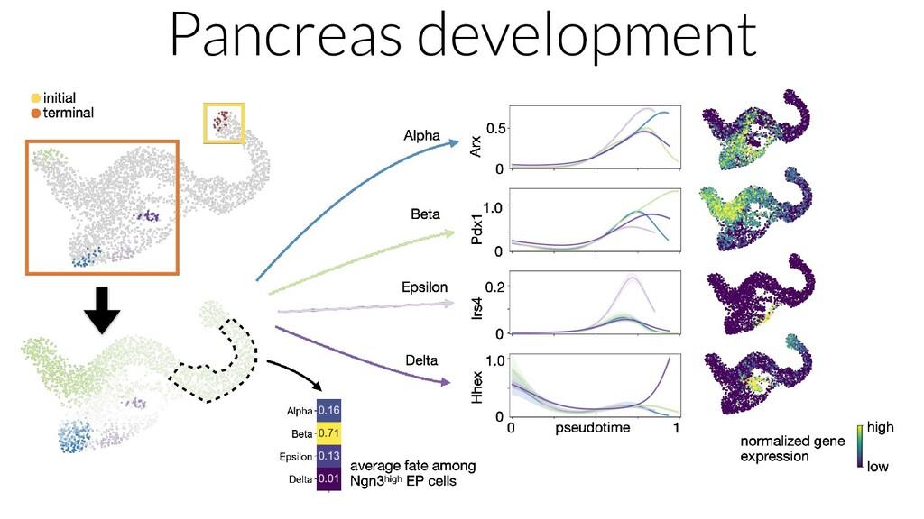 Pancreas development