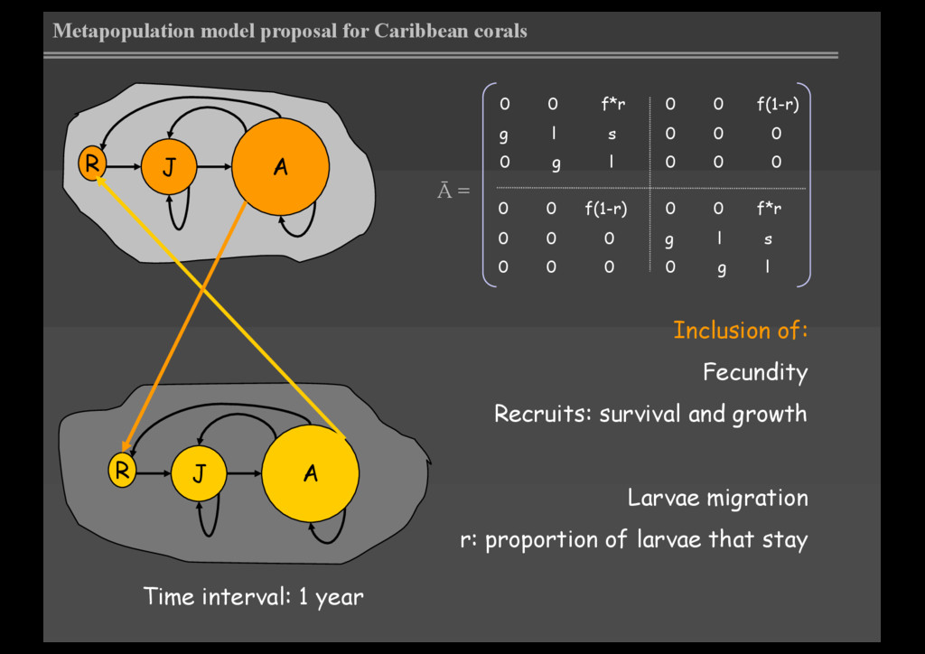 Metapopulation model proposal for Caribbean cor...