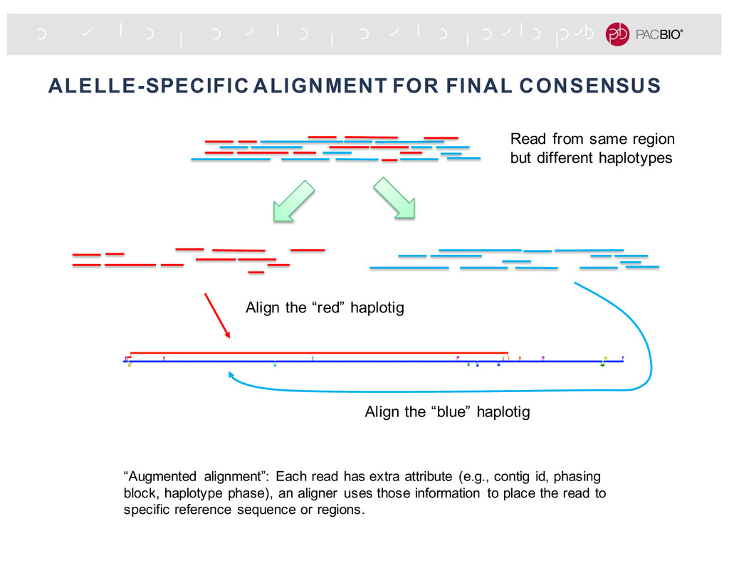 """ALELLE-SPECIFIC ALIGNMENT FOR FINAL CONSENSUS """"..."""