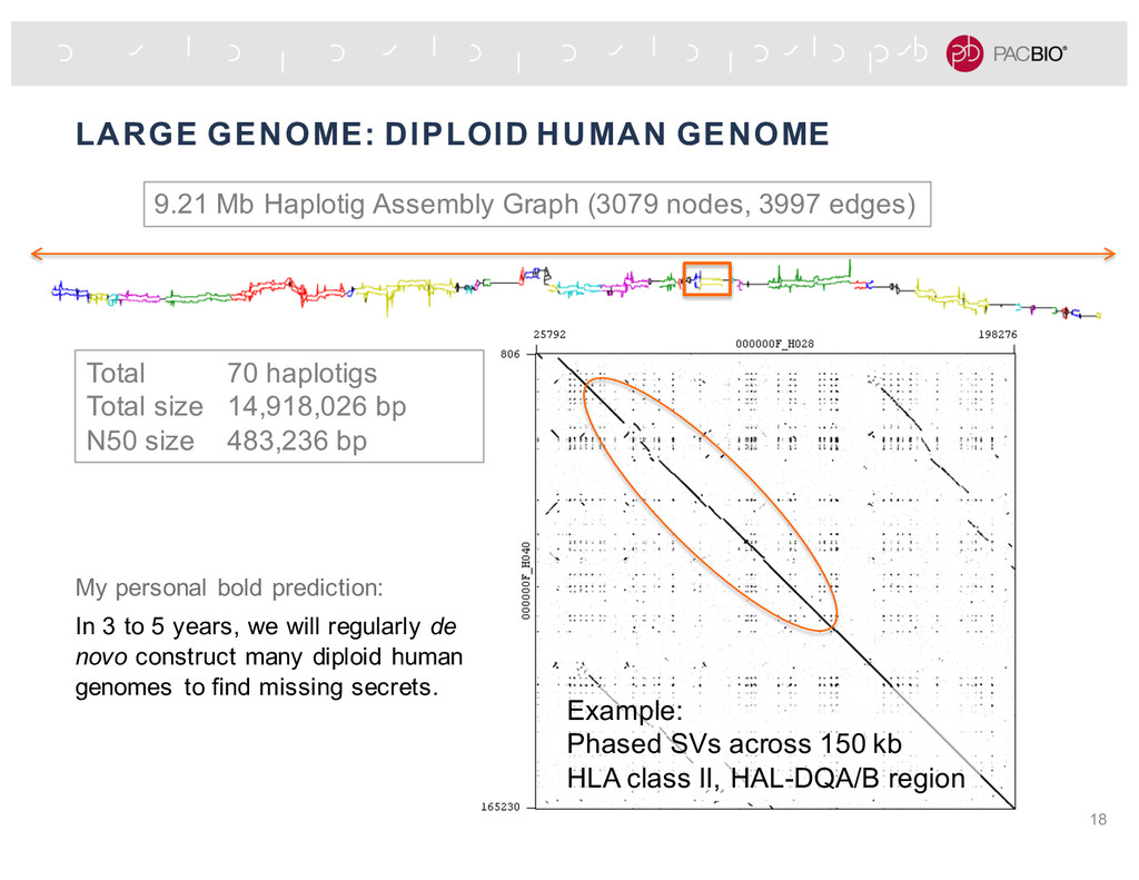 LARGE GENOME: DIPLOID HUMAN GENOME 18 9.21 Mb H...