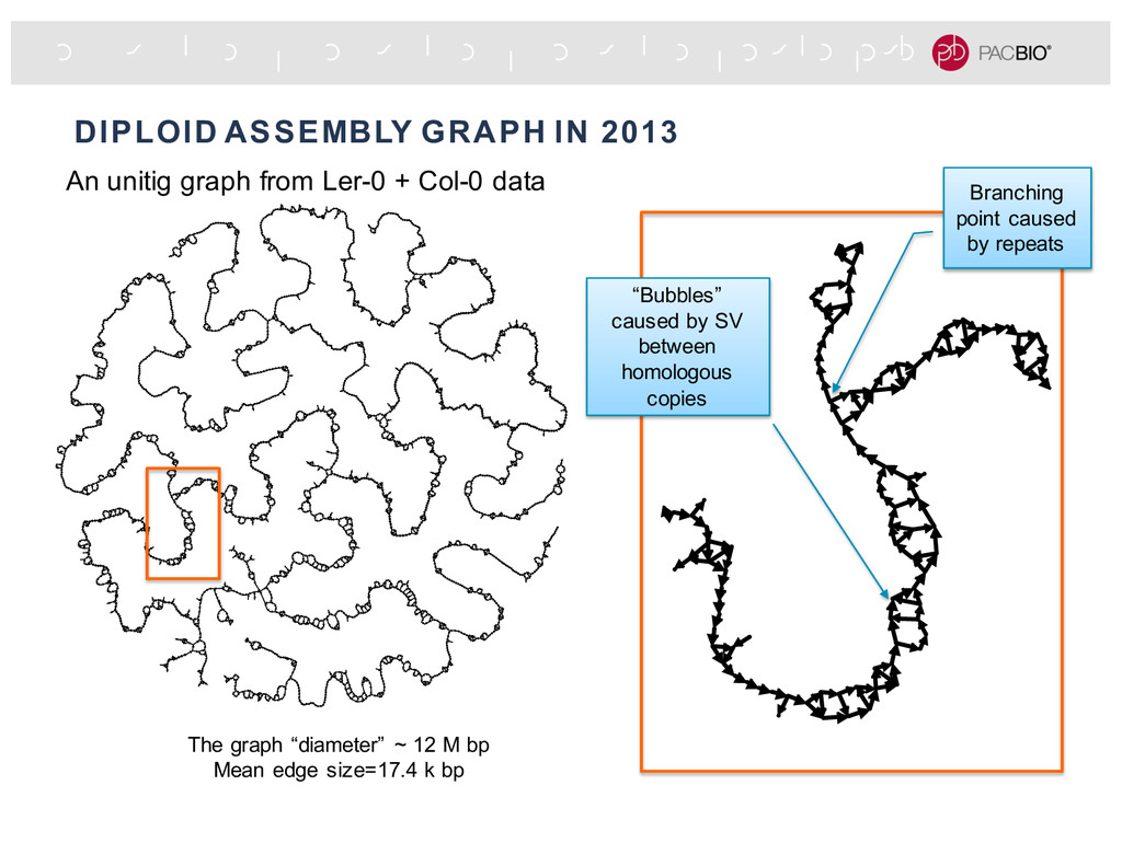 """DIPLOID ASSEMBLY GRAPH IN 2013 """"Bubbles"""" caused..."""