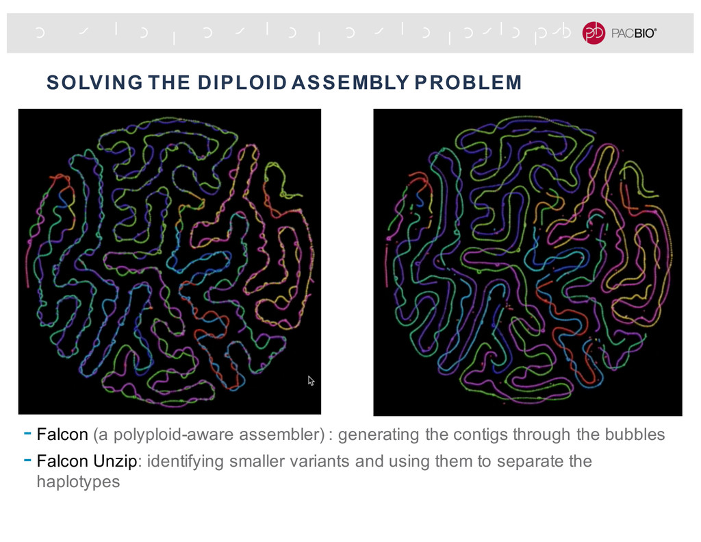 SOLVING THE DIPLOID ASSEMBLY PROBLEM - Falcon (...