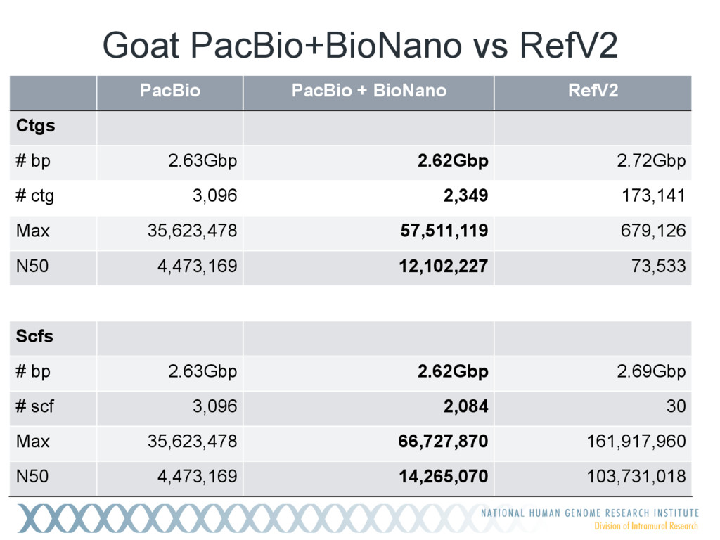 Goat PacBio+BioNano vs RefV2 PacBio PacBio + Bi...