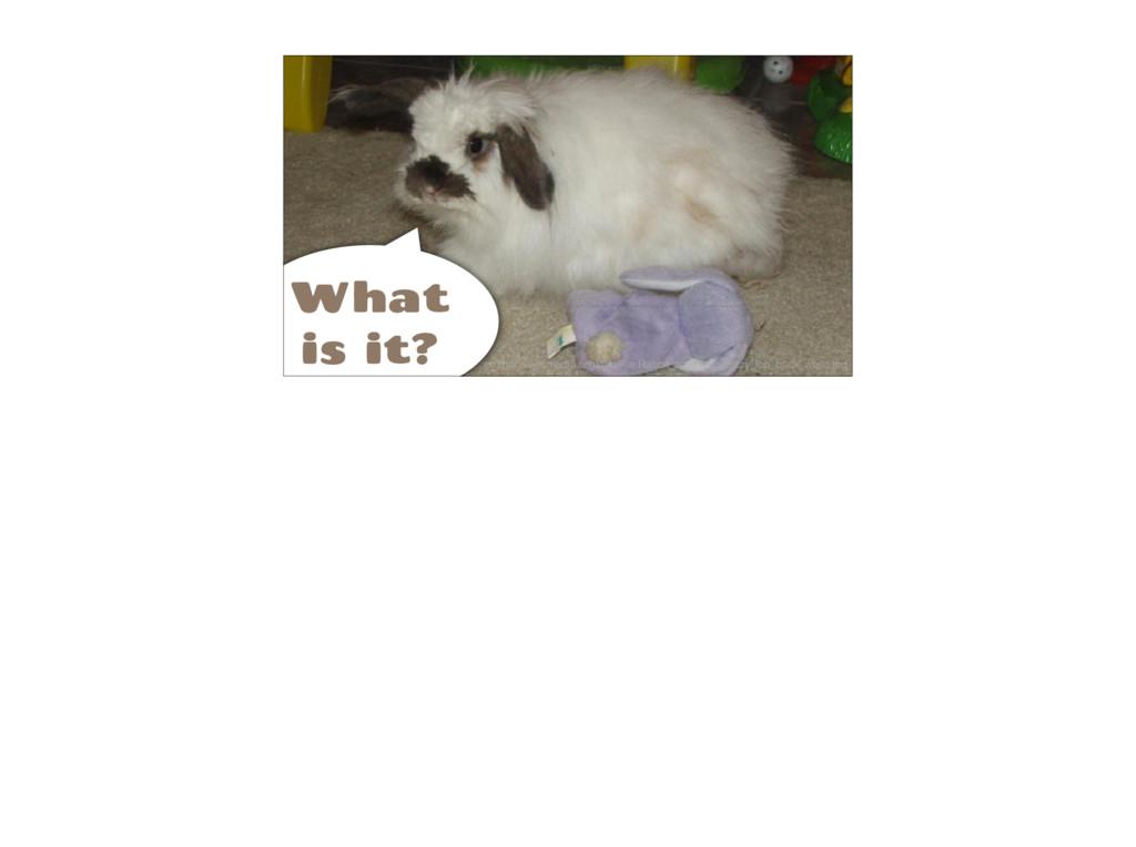 https://commons.wikimedia.org/wiki/File:Rabbit_...