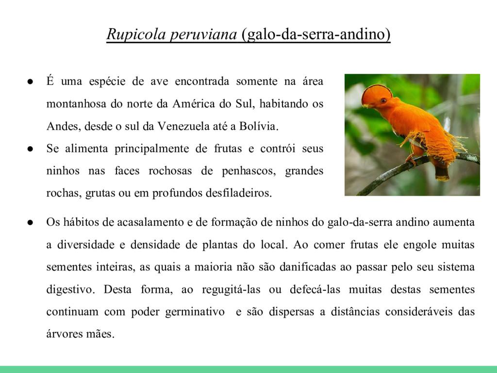 Rupicola peruviana (galo-da-serra-andino) ● É u...