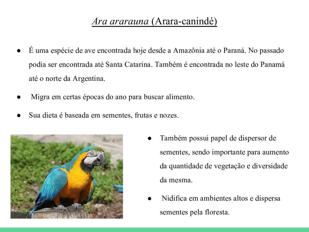 Ara ararauna (Arara-canindé) ● É uma espécie de...