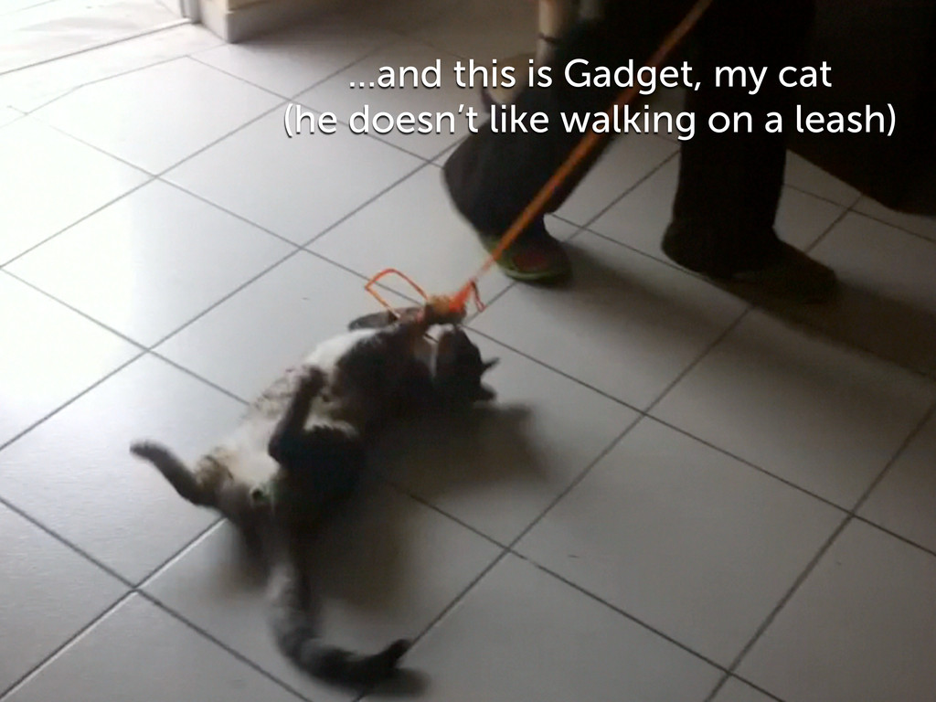 ...and this is Gadget, my cat (he doesn't like ...