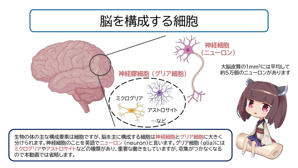 脳を構成する細胞 神経細胞 (ニューロン) 神経膠細胞 (グリア細胞) ミクログリア アストロ...