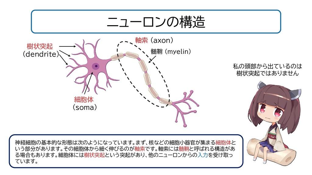 ニューロンの構造 髄鞘 (myelin) 軸索 (axon) 細胞体 (soma) 樹状突起 ...