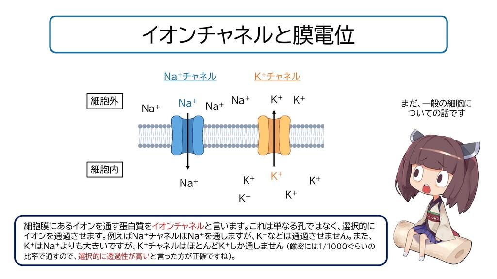 イオンチャネルと膜電位 細胞膜にあるイオンを通す蛋白質をイオンチャネルと言います。これは単なる...