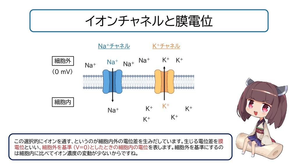イオンチャネルと膜電位 この選択的にイオンを通す、というのが細胞内外の電位差を生みだしています...