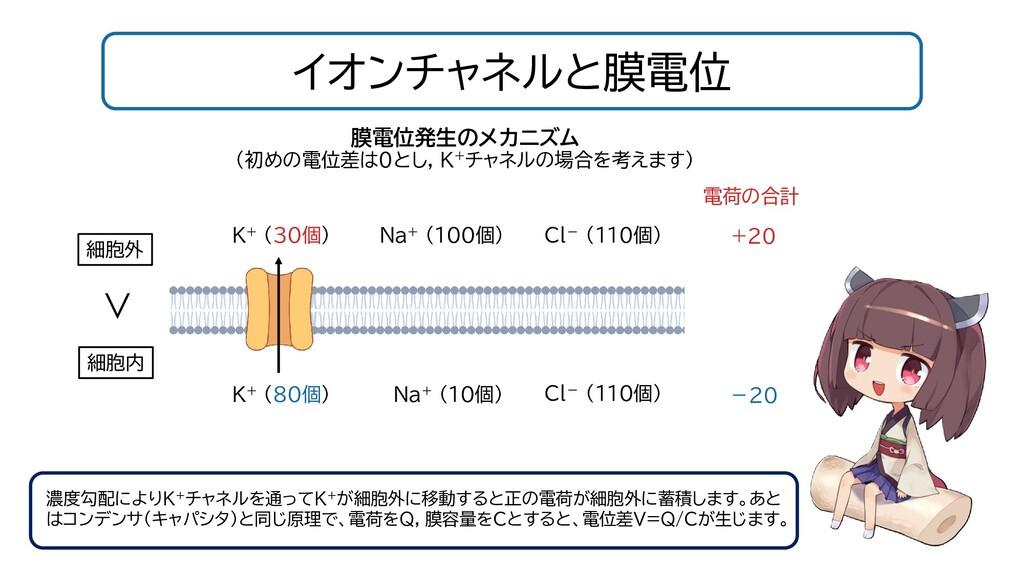 イオンチャネルと膜電位 濃度勾配によりK+チャネルを通ってK+が細胞外に移動すると正の電荷が細...