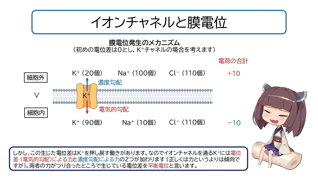 イオンチャネルと膜電位 しかし、この生じた電位差はK+を押し戻す働きがあります。なのでイオンチ...