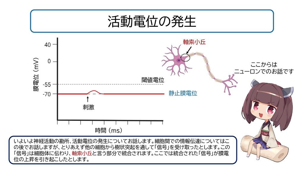 活動電位の発生 閾値電位 静止膜電位 時間 (ms) 膜電位 (mV) 刺激 いよいよ神経活動...