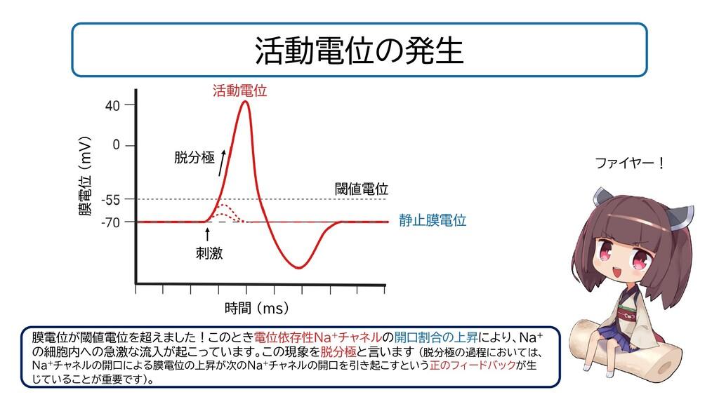 活動電位の発生 閾値電位 静止膜電位 時間 (ms) 膜電位 (mV) 刺激 膜電位が閾値電位...