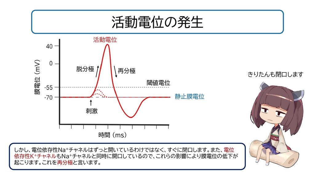 活動電位の発生 閾値電位 静止膜電位 時間 (ms) 膜電位 (mV) 刺激 活動電位 脱分極...