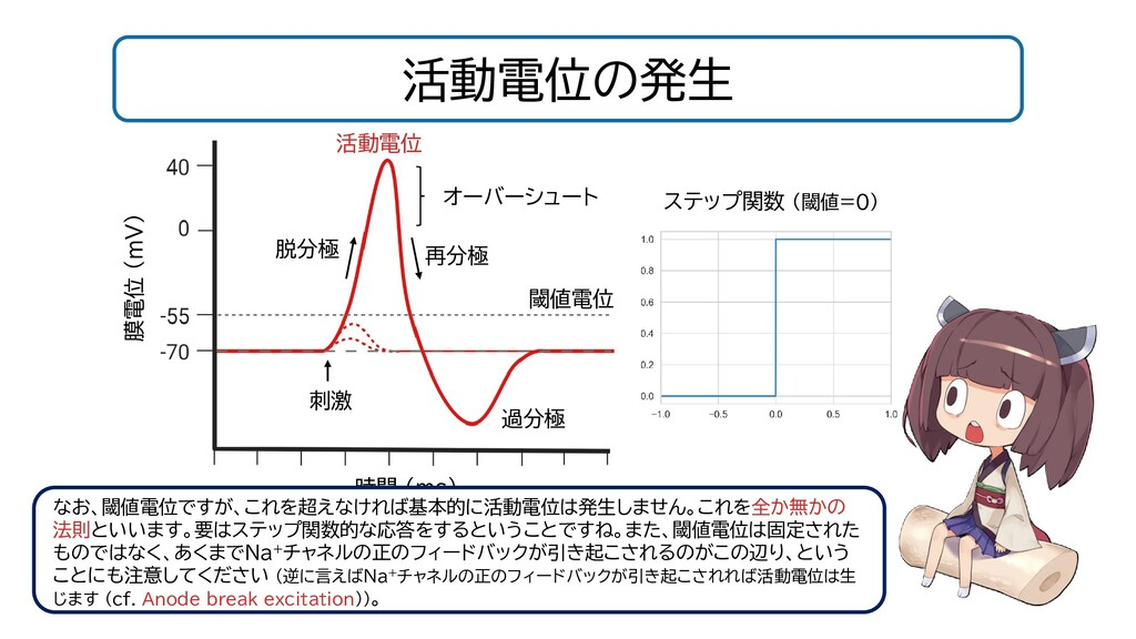 活動電位の発生 閾値電位 時間 (ms) 膜電位 (mV) 刺激 活動電位 脱分極 なお、閾値...