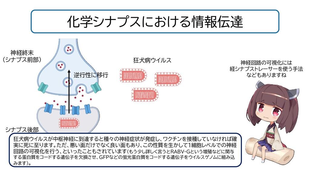 化学シナプスにおける情報伝達 狂犬病ウイルスが中枢神経に到達すると種々の神経症状が発症し、ワク...