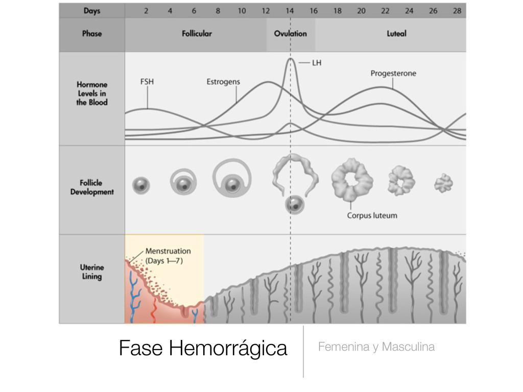 Fase Hemorrágica Femenina y Masculina