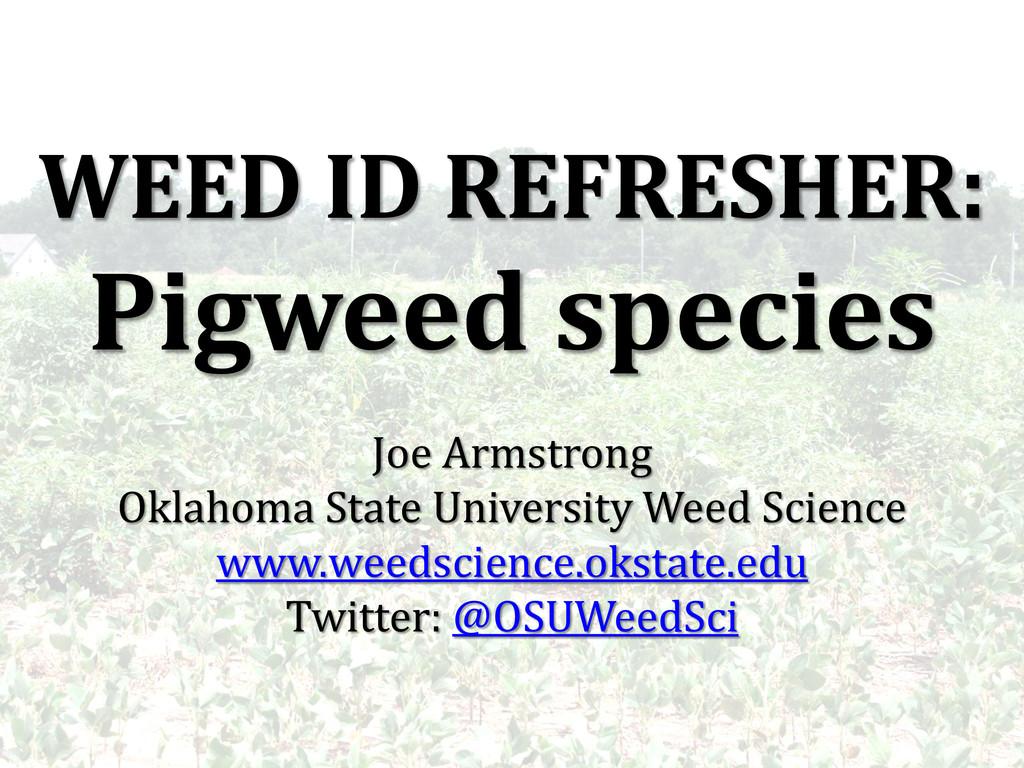 WEED ID REFRESHER: Pigweed species Joe Armstron...