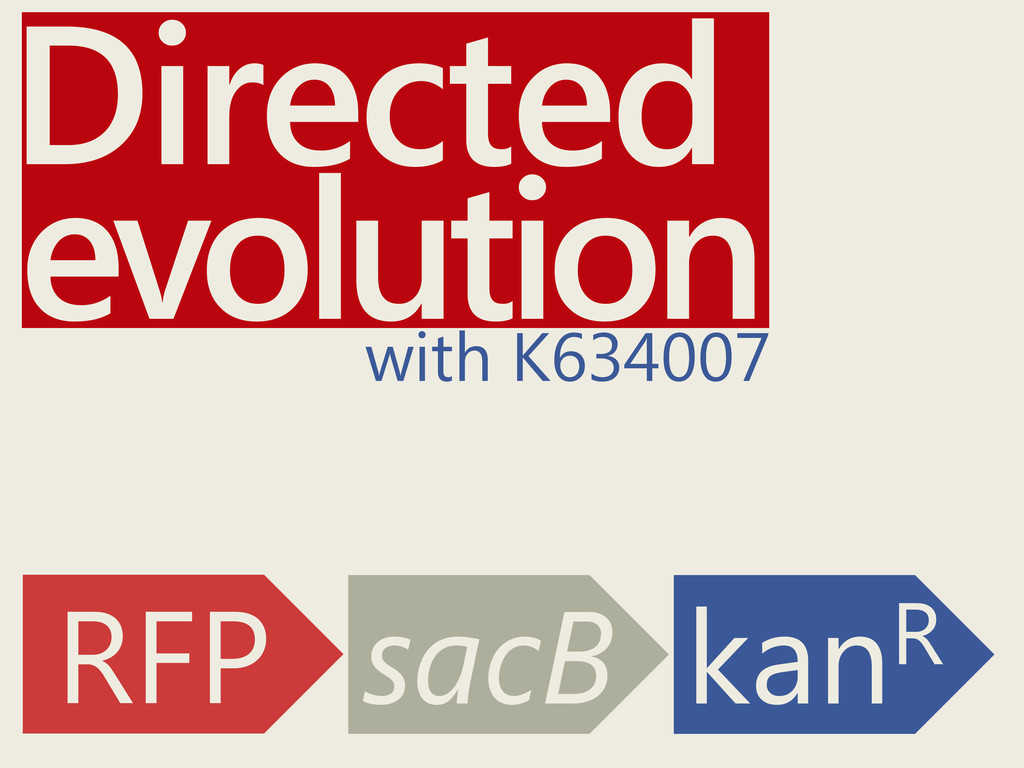 Directed with K634007 RFP sacB kanR evolution