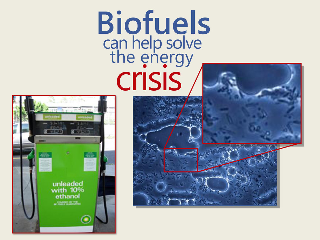 Biofuels can help solve the energy crisis