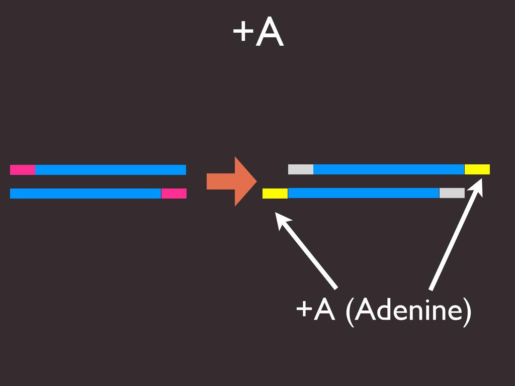+A +A (Adenine)