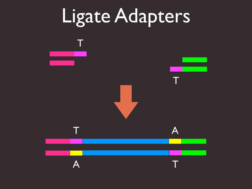Ligate Adapters A T A T T T