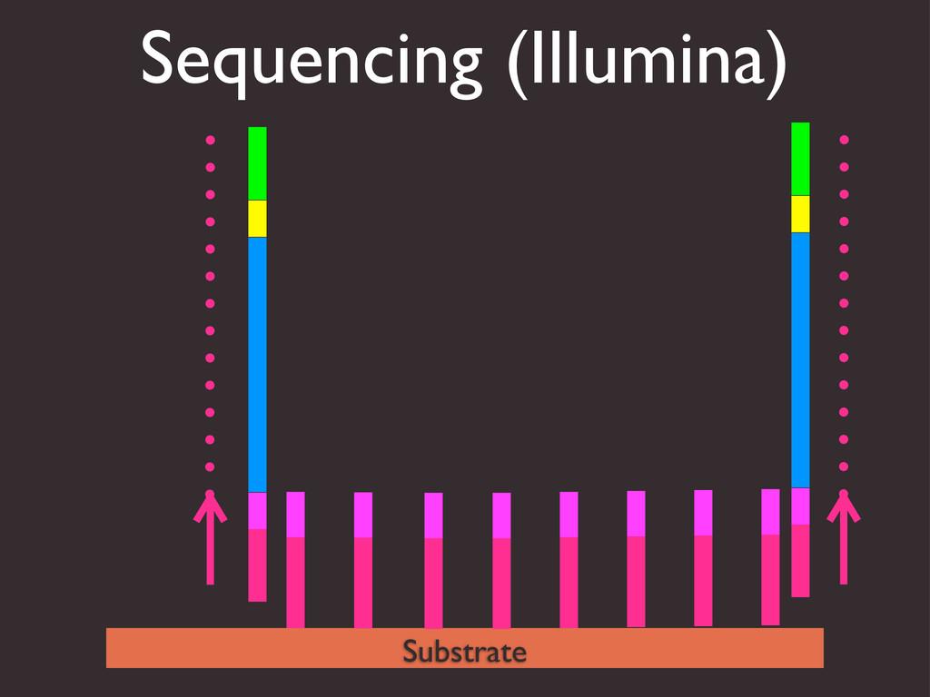 Sequencing (Illumina) Substrate