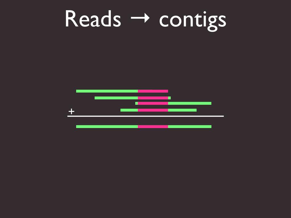 Reads → contigs +