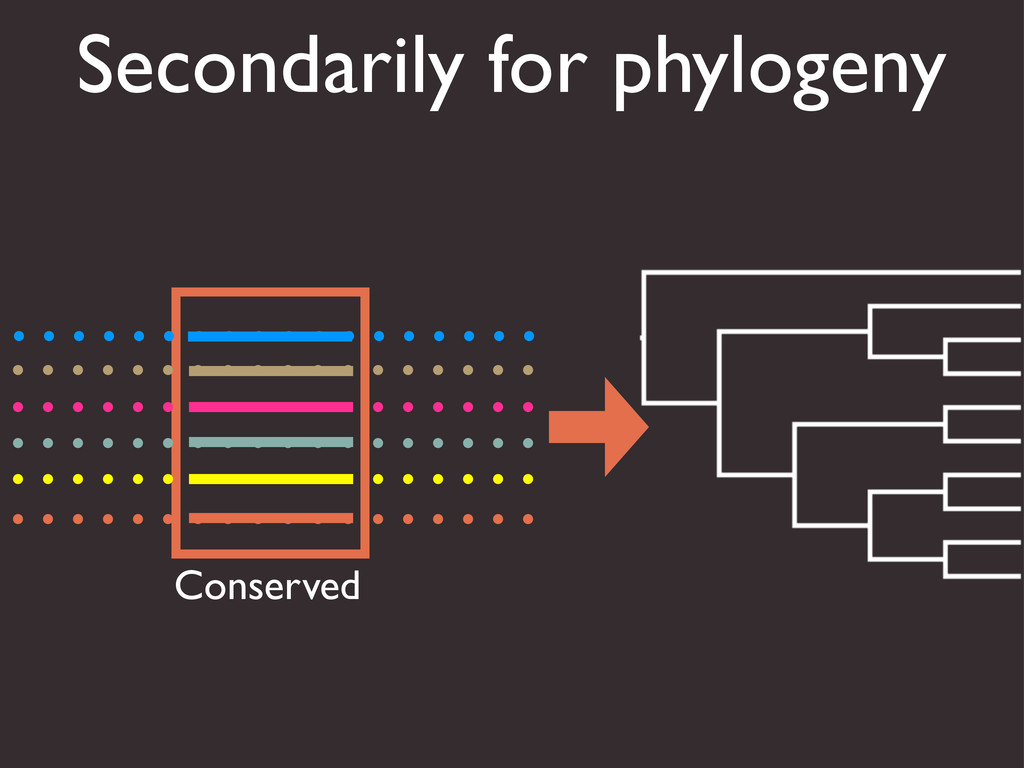 Secondarily for phylogeny Conserved