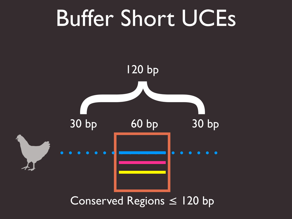 Buffer Short UCEs Conserved Regions ≤ 120 bp 60...