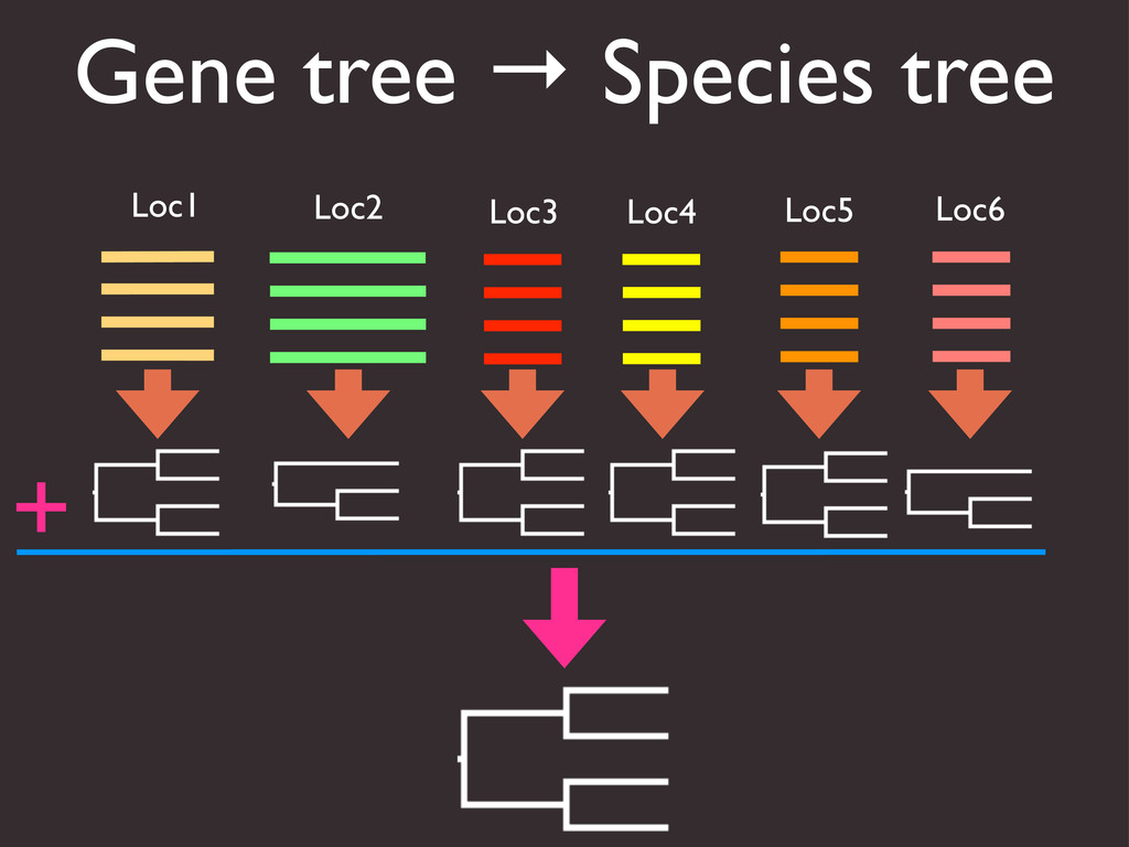 Gene tree → Species tree Loc1 Loc2 Loc3 Loc5 Lo...