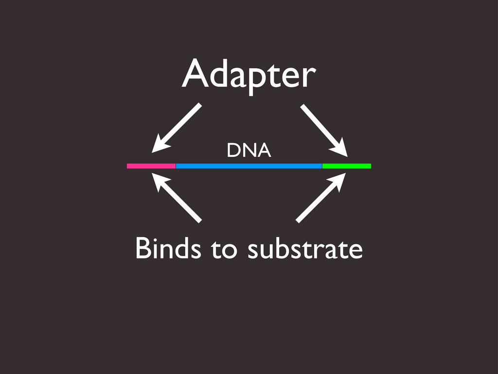 Adapter Binds to substrate DNA