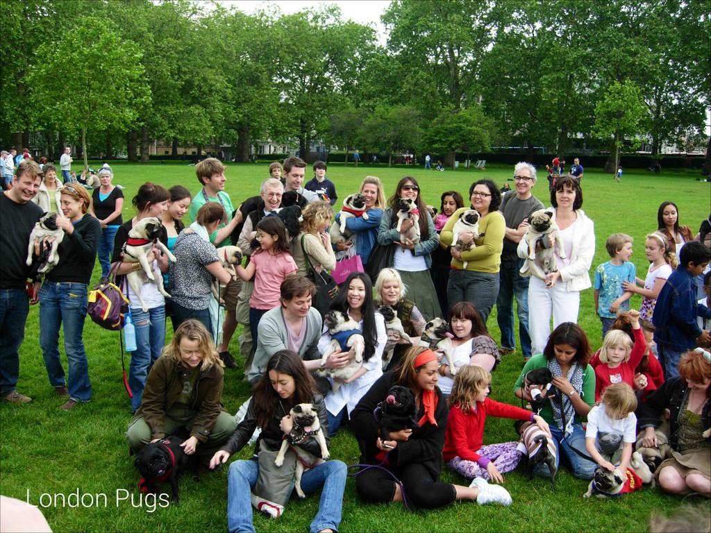 London Pugs