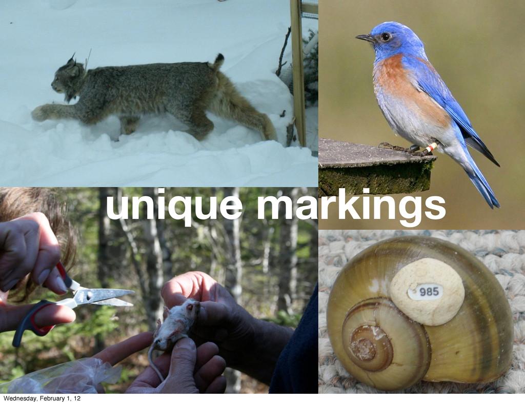 unique markings Wednesday, February 1, 12